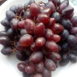 Устойчивый виноград