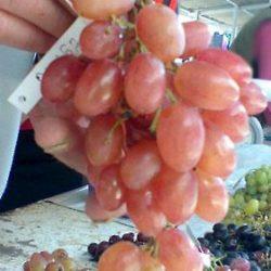Очень ранний виноград