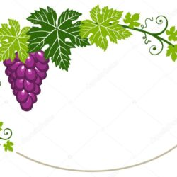 Любимые сорта винограда